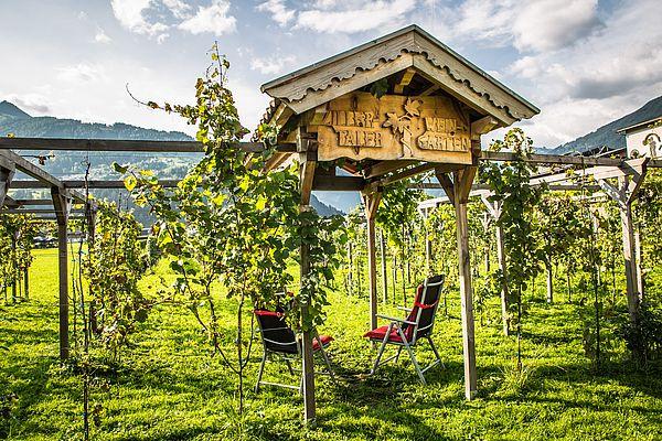 Eingang zum Weingarten im Sommer